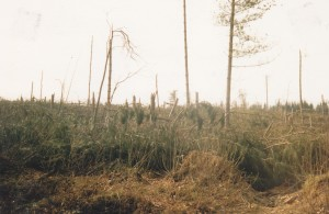 Snape Wood - October 1987
